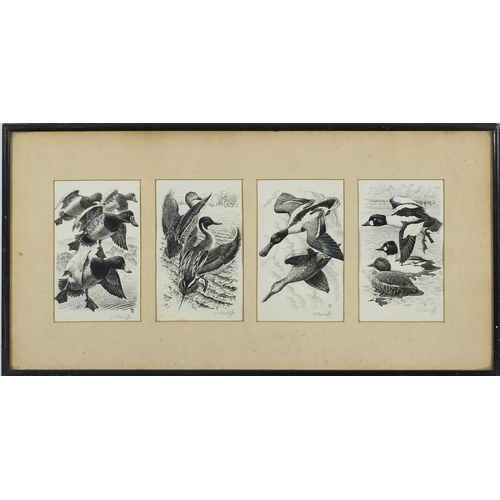 1163 - Charles Frederick Tunnicliffe - Ducks in flight and resting, set of four ink drawings mounted as one...