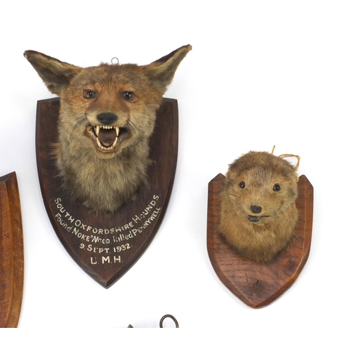 25 - Four Victorian taxidermy fox heads an otters head and tail, the heads mounted on oak shield backs an...
