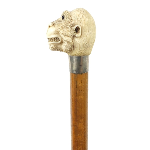 34 - Good Victorian Malacca walking stick with carved ivory pommel in the form of a monkey's head, having...