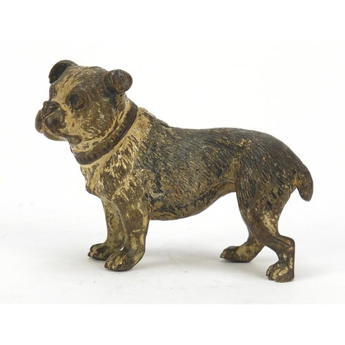 19 - Austrian cold painted bronze Bulldog, possibly by Franz Xaver Bergmann, indistinct impressed marks t...