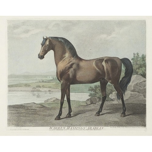After George Stubbs- Warren Hastings Arabian, hand coloured engraving, framed and glazed, 28.5cm x 22.5cm excluding the frame