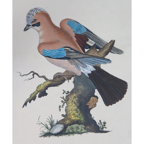 314 - E. Donovan, The Natural History of English Birds, printed for the author and F. and C. Rivington 179...
