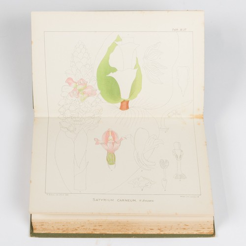 73 - Harry Bolus - THE ORCHIDS OF THE CAPE PENINSULA