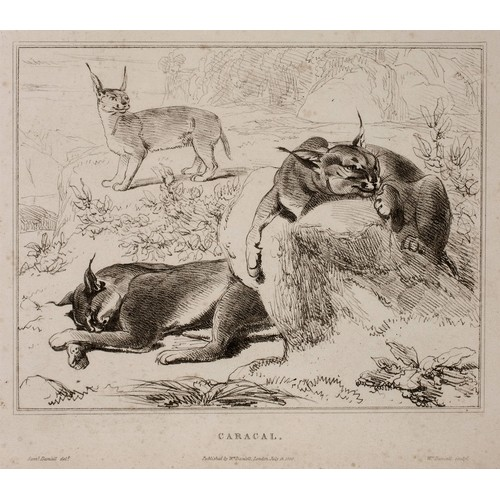 76 - Samuel Daniell - SKETCHES REPRESENTING THE NATIVE TRIBES, ANIMALS AND SCENERY OF SOUTHERN AFRICA