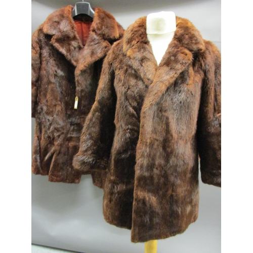 51 - Ladies three quarter length dark brown fur coat together with a similar jacket...