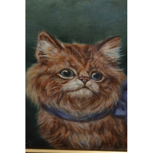 1173 - Late 19th / early 20th Century oil on card, portrait of a cat with blue collar, monogramed E.A., in ...