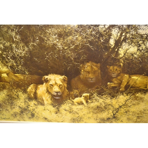 1269 - David Shepherd, signed coloured print, ' Pride of Lions ', 19.5ins x 29.5ins, framed...