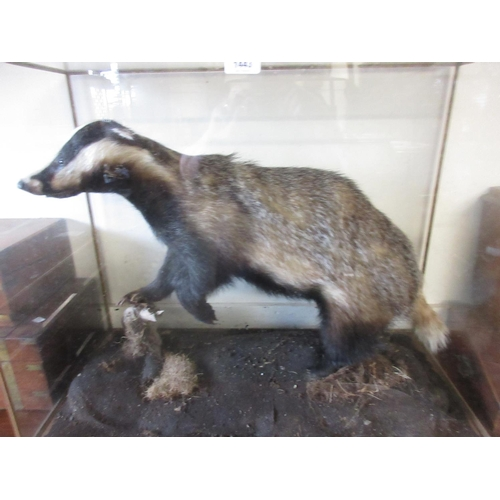 1443 - Taxidermy wooden and glass cased badger on naturalistic base, 32ins wide x 25ins high x 16ins deep...