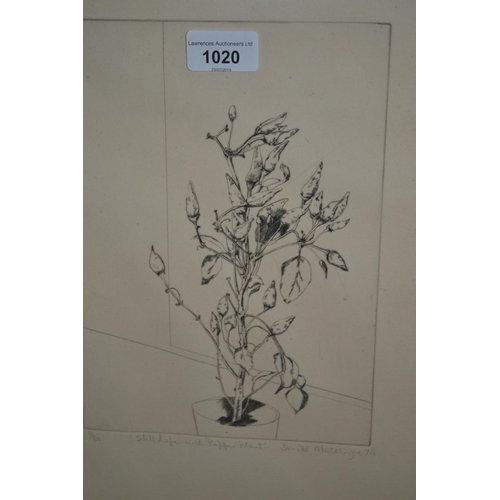 1020 - Donald MacKenzie, etching ' Still Life with Pepper Plant ', No. 1 of 50, signed and dated '74, 9.75i...