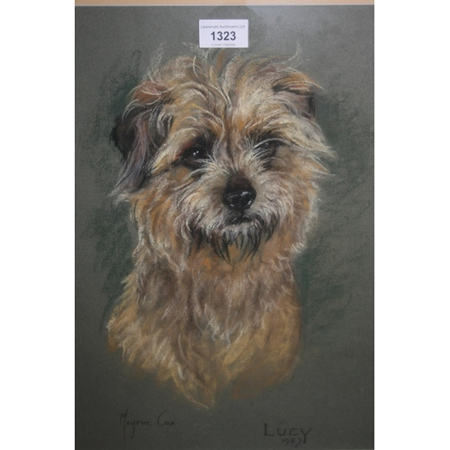1323 - Marjory Cox, pastel study of Lucy, a terrier dog, signed, 16ins x 11.5ins, framed...
