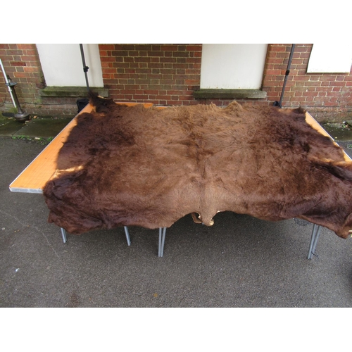 2128 - Large bison skin and another similar...