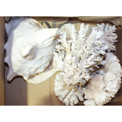 187 - A collection of coral,two sea shells, etc.