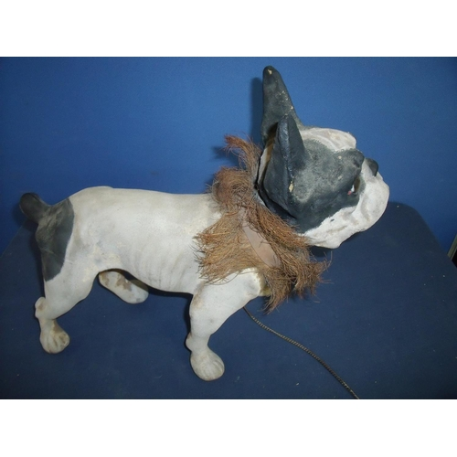 190 - Large composite French Bulldog with articulated head, pull growler and collar with trim (38cm high)...