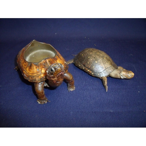 49 - Taxidermy study of a Terrapin in the form of a ashtray and another of a tortoise (2)...