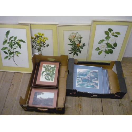 262 - Selection of framed and mounted botanical prints and other pictures...