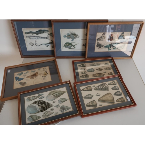 37 - Seven framed and mounted natural history coloured book plate prints including sea shells, fish, and ...