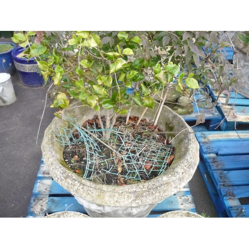 4 - Large reconstituted stone planter with fruiting vine decoration (diameter 31.5
