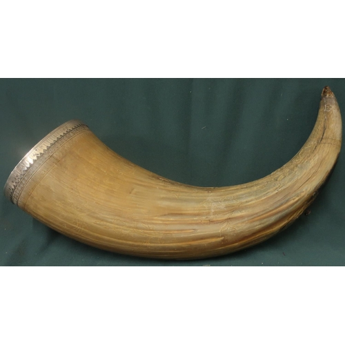 145 - Extremely large bulls horn with engraved floral detail and border patterns, mounted with white metal...