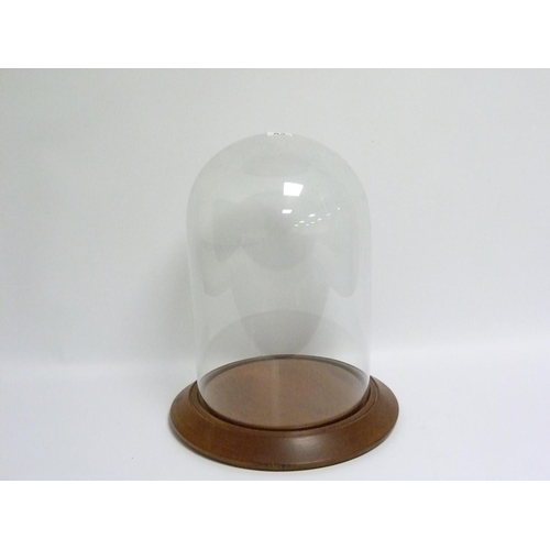 53 - Glass display dome on turned mahogany plinth base, approx. 39cm high, base diam. 32cm, the dome appr...