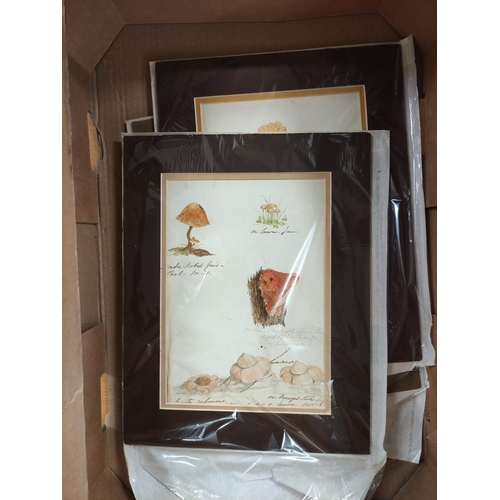 44 - ARTIST UNKNOWN.Toadstools & Fungi. 8 multiple & single image original watercolou...