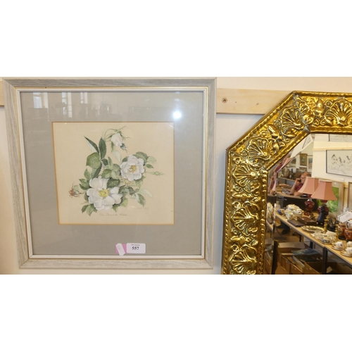 557 - Framed Watercolour - Jacobite Rose by M. McM 1979, measuring approx 23 x 20cm.