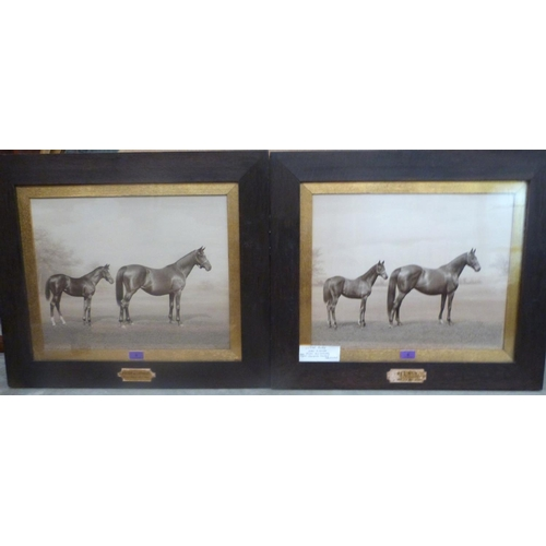 2 - A pair of oak framed racing photographic prints by Clarence Hailey, Newmarket, 'Pride of Lothian' an...